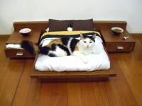 20 meubles adaptés pour les chats