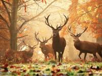 25 magnifiques paysages d'automne