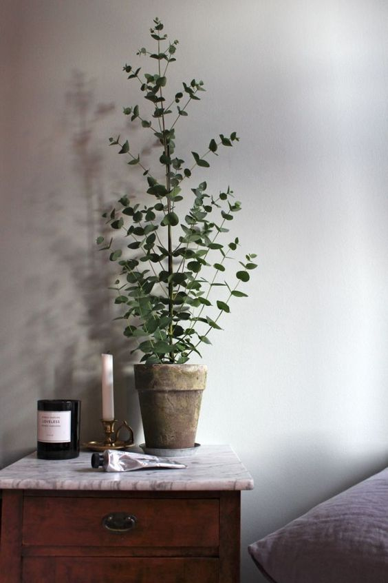 design plantes interieur decoration 0