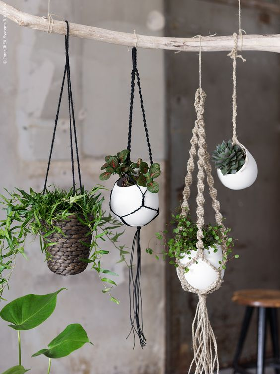 design plantes interieur decoration 02