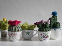 Les plus doux et mignons cactus sont tricotés à Montréal!
