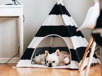 23 des plus jolis meubles adaptés pour vos chiens